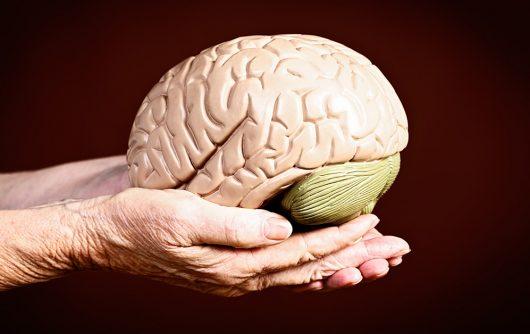 Comment le cerveau change avec l'âge