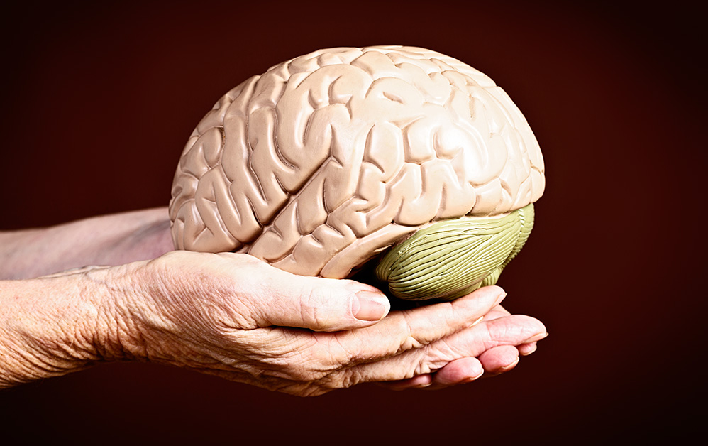 senior hands holding brain